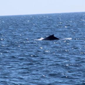 Día Mundial de las ballenas y losdelfines