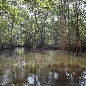 El manglar, un ecosistema para lavida