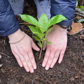 Más de 22 mil familias beneficiadas con los Incentivos Forestales en2021